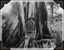 An example of the big jungle trees in New Guinea.